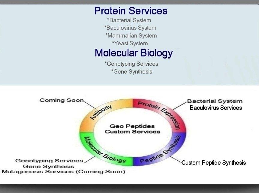 Peptides For Sale Online - Buy Peptides - Geo Peptides
